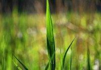 Российские космонавты вырастят болотную траву в невесомости