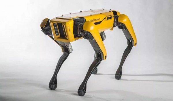 Роботы SpotMini тащили фуру по асфальтовой дороге, которая шла вверх под небольшим наклоном