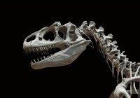В Аргентине найдены останки 10 динозавров