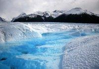 Аномальные улитки появились в Арктике