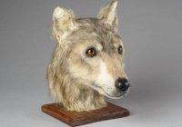 Стало известно, как выглядели собаки 4,5 тыс. лет назад