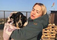 Похороненная заживо собака выбралась из могилы в Приморье