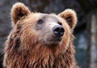 Составлен рейтинг наиболее опасных животных России