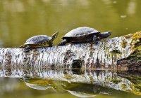 В аэропорту Колумбии изъяли больше 1 тыс. черепах