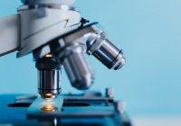Полусинтетические клетки человека создали в Шотландии