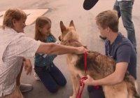 В США собаку нашли за тысячи километров от дома