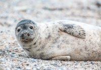 Под Калининградом тюлененок залез в лодку к ныряльщикам (ВИДЕО)