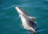 Экологи: сотни дельфинов выброшены на берега Франции