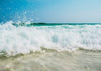 В океане обнаружено почти 200 тыс. новых вирусов
