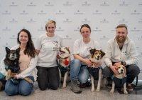 В Домодедово можно обнять собак, чтобы победить аэрофобию