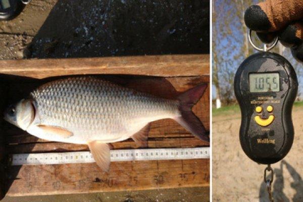 При этом с рыбы было взято несколько чешуек, чтобы позже установить возраст особи в условиях лаборатории