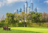 Через 5 лет Дубай станет в 2 раза зеленее