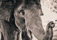 Голодный слон напал на семью в Китае