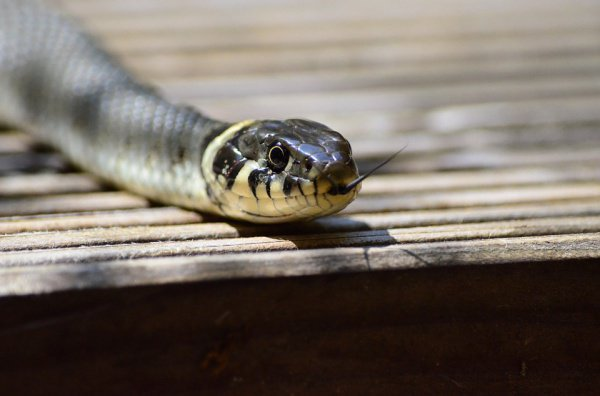Жертвами змей чаще всего становятся дети и бедные фермеры, живущие в странах Африки и Азии