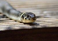 Стало известно, сколько человек ежегодно убивают змеи