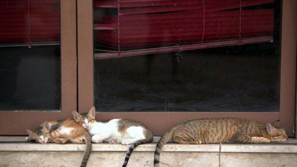 По данным специалистов, на улицах Дубая живут десятки тысяч бездомных кошек