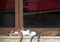В Дубае создадут специальные зоны для кормления бездомных кошек