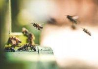 «Гостиница» для диких пчел появилась в Москве