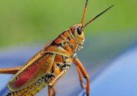 ООН рассказала о пользе еды из насекомых