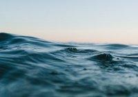 Обнаружены морские существа неизвестного происхождения