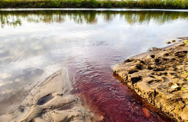 Предположительно, это произошло из-за неустановленных химикатов, попавших в воду