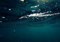 Пластик в океанах убивает бактерии, которые вырабатывают кислород