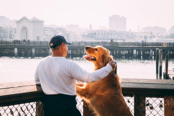 Из-за несвоевременной диагностики собачьего бруцеллеза и отсутствия терапии есть риск заработать инвалидность