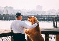 Вспышка собачьей болезни, угрожающей людям, замечена в США