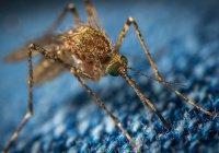 Россиян предупредили об опасности комаров во Франции