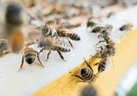 В Испании пара 2 года прожила с 80 тыс. живых пчел в своей спальне