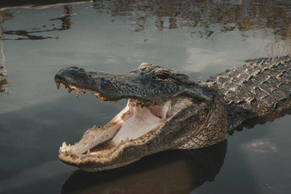Австралиец зажег огонь, вызвал спасательную службу и влез на дерево, чтобы избежать встречи с крокодилами