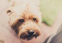 На Филиппинах собака поразила людей своей верностью