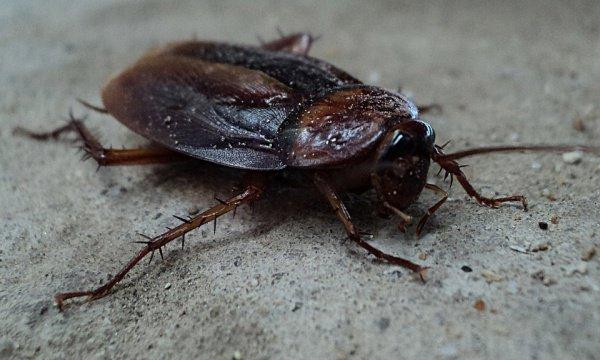 При этом причиной неприятных ощущений оказался обычный таракан