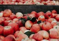 Экспресс-метод оценки безопасности овощей и фруктов создан в России