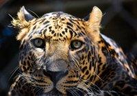 В России 6 видам животных грозит вымирание