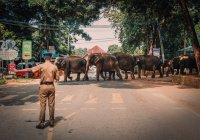 Задержан мужчина, подозреваемый в связях с террористами в Шри-Ланке