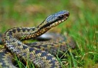 Житель Красноярска позволил змее укусить себя ради селфи