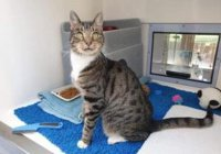 Чихающий кот из Британии не может найти себе хозяина