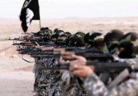 «Управление дикостью»: книга о создателях ИГИЛ