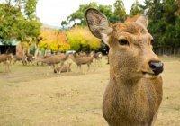 В Наре в желудке оленя нашли 4 кг полиэтиленовых пакетов