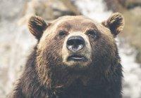 В Красноярском крае на детскую площадку забрел медведь
