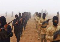 «Управление дикостью»: книга о создателях ИГИЛ. Часть 2