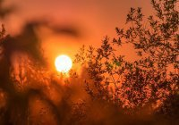Названы эффективные способы пережить жару