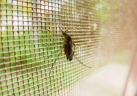 Создан грибок, убивающий 99% популяции малярийных комаров