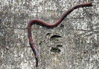 Туристов на Гавайях предупредили о червях, поедающих мозг