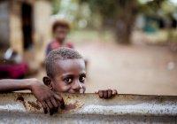 В ООН рассказали, когда человечество забудет о голоде