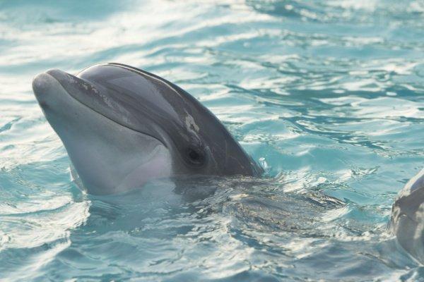 По словам экспертов, такая мутация у китообразных фиксируется впервые