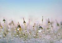 В Мурманске выпал июньский снег (ВИДЕО)