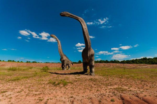Находка названа «колоссом среди гигантов»