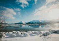 Десятки мертвых тюленей выбросило на берег Аляски
